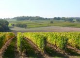 Le vignoble chablisien